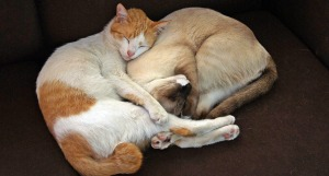 Two cars curled up sleeping together